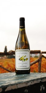 La Capinera Marche Chardonnay  IGT