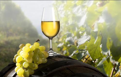 Vino sfuso bianco da tavola IGT Marche, biologico - 5l