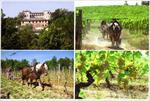 azienda agricola Castello di Tassarolo - Tassarolo(AL)