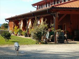Azienda Vitivinicola Santa Clelia