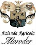 MORODER ALESSANDRO - Ancona(AN)