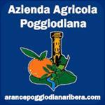 Arance Poggiodiana ribera Sicilia - Agrigento(AG)