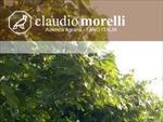 AZIENDA AGRARIA MORELLI CLAUDIO  - Fano(PU)