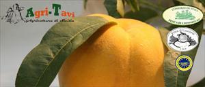 Agri-Tavi