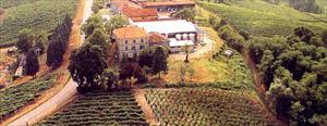 Azienda vinicola CasaBella