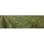 Agricola Franzese - Castrovillari(CS)