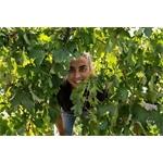 Arianna Occhipinti Azienda Agricola - Vittoria(RG)