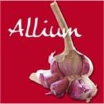 Allium Di Gianluca Delle Monache - Penne(PE)