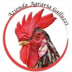 Azienda agraria Galluzzi - Castelfidardo(AN)