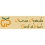 Gambini Paolo - Pesaro (Pu) - Pesaro(PU)