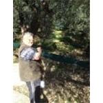 Il Colle Degli Ulivi - Diano Marina(IM)