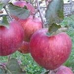 Il Frutteto Di Bersej - Portula(BI)