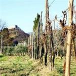 Cooperativa Agricola 'Comunità Sant'Arsenio' - Reggio di Calabria(RC)