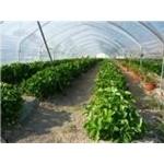 Societa' Agricola La Fattoria - San Prospero(MO)
