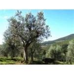 La Valle Del Sasso Di Giannetti Flavio - Pontassieve(FI)