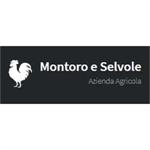 Montoro E Selvole - Greve in Chianti(FI)