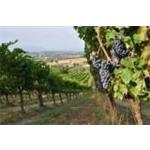 Moretti Olio E Vini Biologici - Giano dell'Umbria(PG)