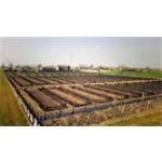 Az. Agricola Parizzi - Lumache Italiane - San Secondo Parmense(PR)