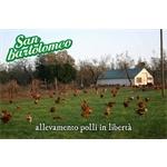 San Bartolomeo Soc.Coop.Agricola - Viterbo(VT)