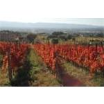 Tili Vini - Assisi(PG)