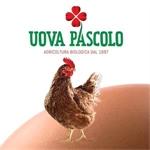 Pascolo Sergio - Coseano(UD)