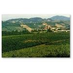 Azienda Vitivinicola  Cav. Italo Testa - Castell'Arquato(PC)