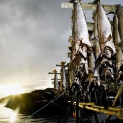Tørrfisk-fra-Lofoten-IGP